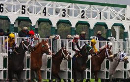 Grade 1 Stakes Races Results and Payouts