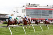 Preakness Stakes Payouts & Results [WIN, PLACE, SHOW]
